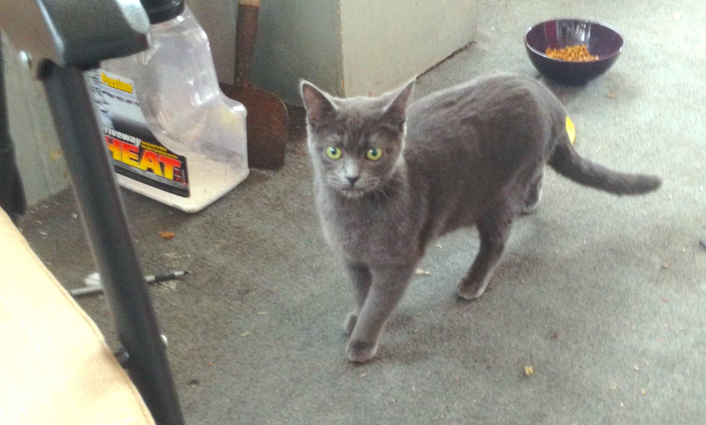 """『猫なんて嫌いだ』という男性宅に入ってきた猫が、出産 ⇒ """"ツンデレパパの奮闘記""""をご覧ください♡"""
