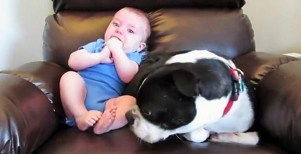 赤ちゃんのお尻から変な音がしたので、クンクンしてみた → ワンコの正直すぎる反応がヤバい(笑)