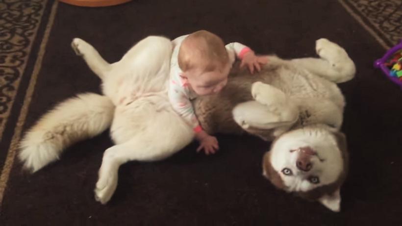 赤ちゃんにポンポンされて、嬉しそうなワンコ♪ 何をされてもゴキゲンで、大らかな姿にキュン♡