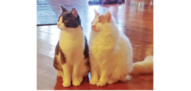 """友達が欲しくて寂しそうにしていた盲目の猫。念願の """"大親友"""" が出来て喜ぶ姿に、心温まる♪(6枚)"""