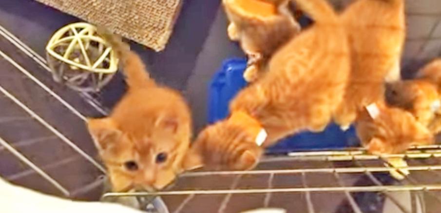 【もくもく登る】飼い主さんを見つけた子猫たちが、続々と集まってきてしまい…(; ・`д・´)
