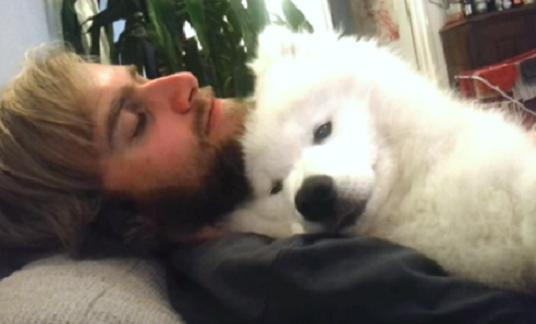 飼い主さんにハグされてウトウト…♡ サモエド犬が見せる、安心しきった表情がかわいすぎる(*´ェ`*)