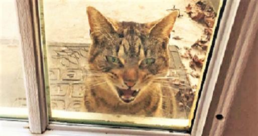 【飼えニャーッ!】ある日ネコが、強気すぎる態度で押しかけて来た → 突然のアプローチに、家主は…♪