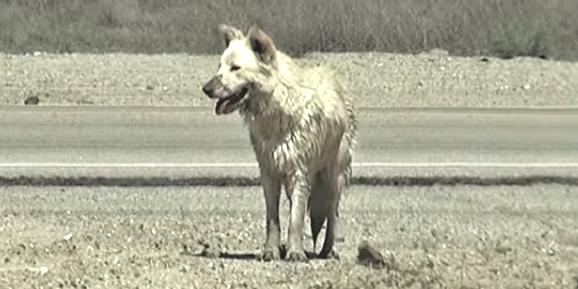 人間を避け、砂漠で泥水を飲んでいた犬。4カ月にも及ぶ保護活動の末、人間の愛が伝わった瞬間…!