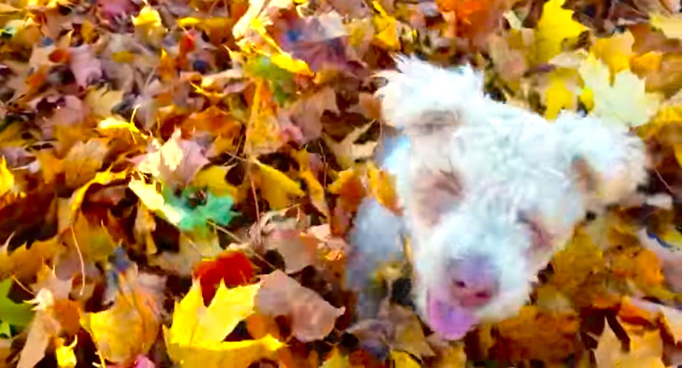 生まれながら盲目の子犬。全身で思いっきり落ち葉遊びする姿に…心が温かくなる(*´ェ`*)