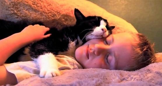 """20歳で施設から引き取られた老猫。それから2年間、 """"最期の時""""まで幸せ一杯に過ごす姿に、涙が出る。"""