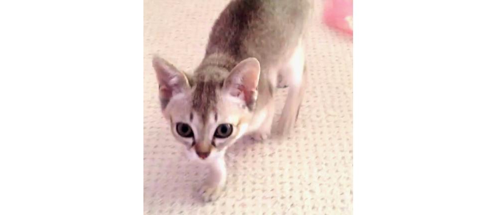 【表情が一変!】あどけない子猫のストレッチタイムが、ライオン級の迫力だった…(; ・`д・´)♡