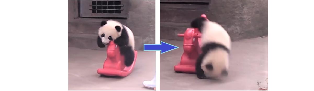 木馬遊びで油断しすぎた子パンダ → 次の瞬間起きたハプニングの一部始終が…(*´ェ`*)♡