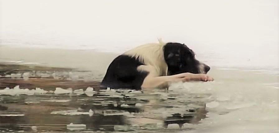 凍った池に落ちた犬のために、半裸で救助に向かったおじさんが勇敢すぎると話題に…!