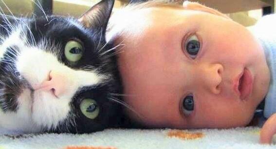 【猫と子どもは最強のコンビ!】見ていて心がポカポカしちゃう、仲良し画像6選(*´ェ`*)♡