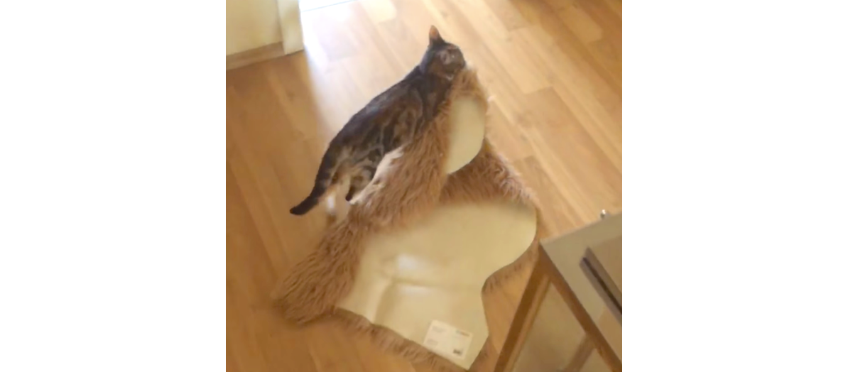 自分の体より大きな「足ふきマット」をせっせと運ぶ子猫。彼にはある計画があった…♡