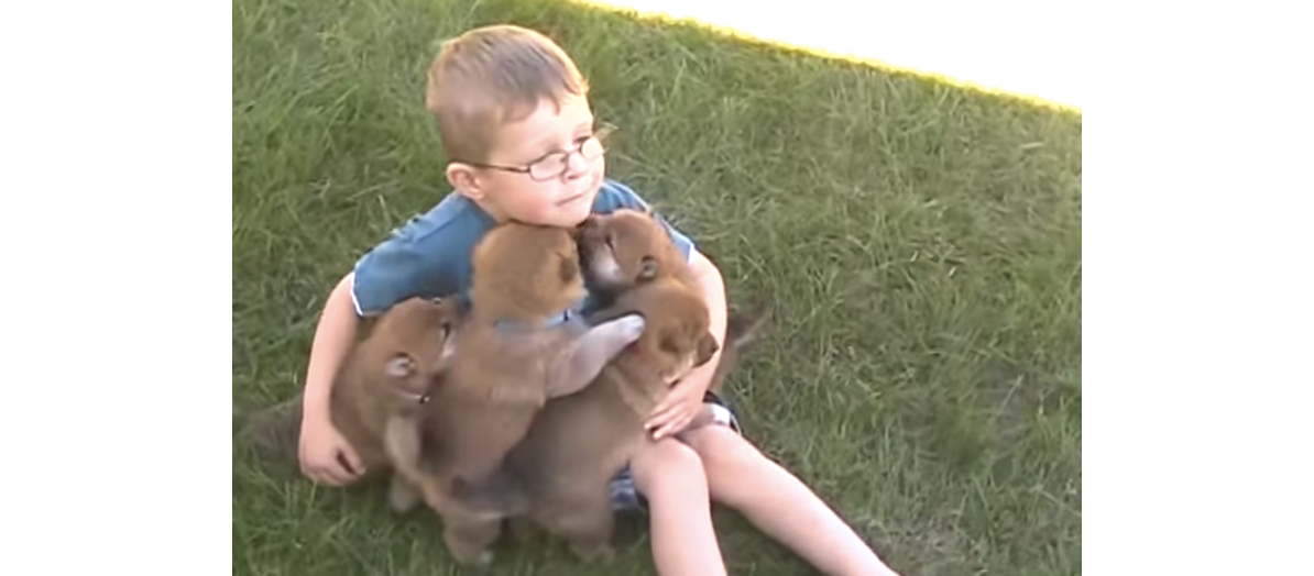 【一匹もこぼれないように…】集まってきた柴犬を、大事にハグする男の子が可愛すぎた…(*´ェ`*)