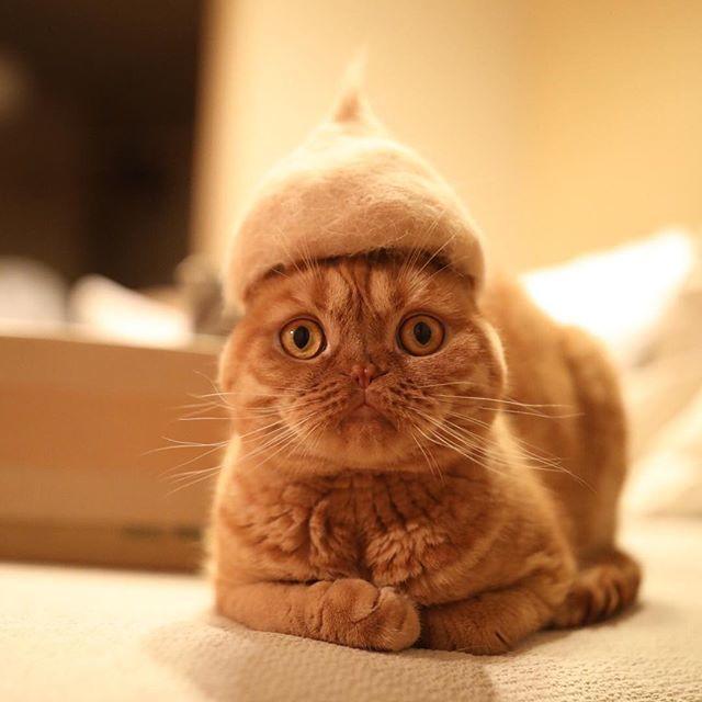 自分の抜け毛で作られた『帽子』を被ったネコたち。ほのぼのカワイイ写真が話題に…(*´ェ`*)♡ 9枚