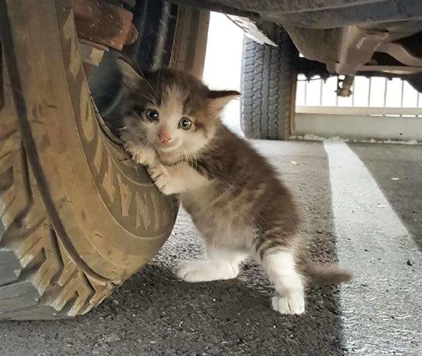 「連れて帰っていい?」夫が送ってきた子猫の画像、その姿を見て妻はダメとは言えませんでした♡