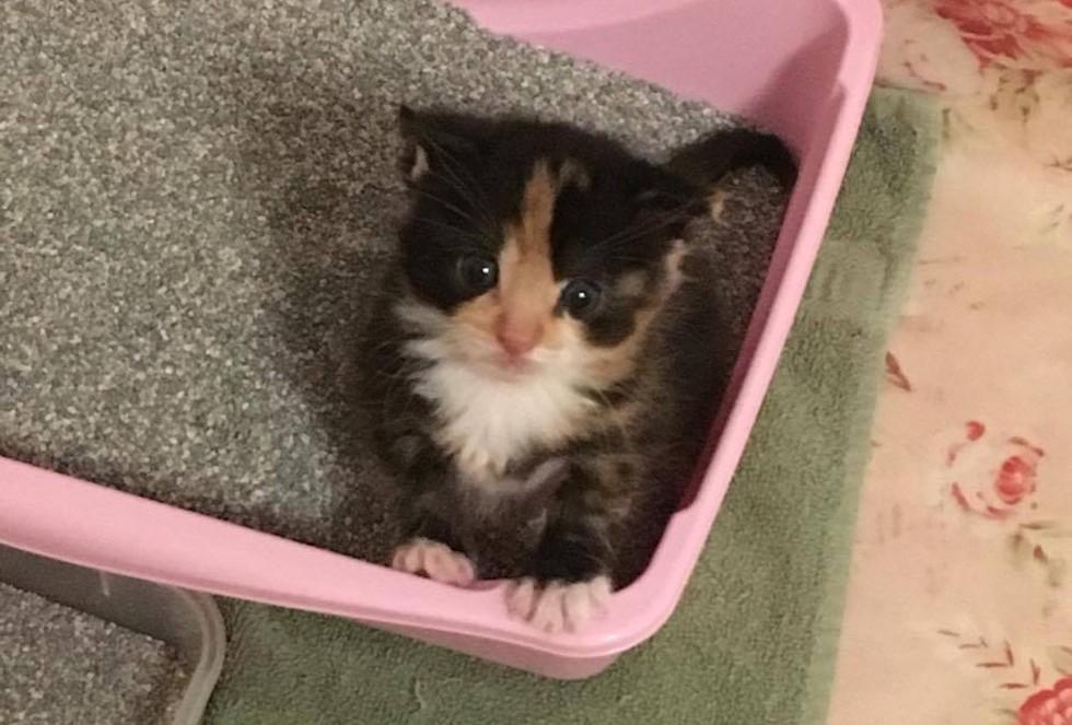 病気と闘う女性が見つけた瀕死の子猫。放っておけずに保護してから、半年が経ち…!(10枚)