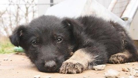 """パピーミル(子犬工場)からのレスキュー。小さな体に起こった""""異変""""に胸が苦しくなる…。"""