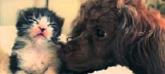 『今日からは家族だよ』保護された子猫に寄り添うプードル、あたたかい眼差しに愛情を感じる30秒間。