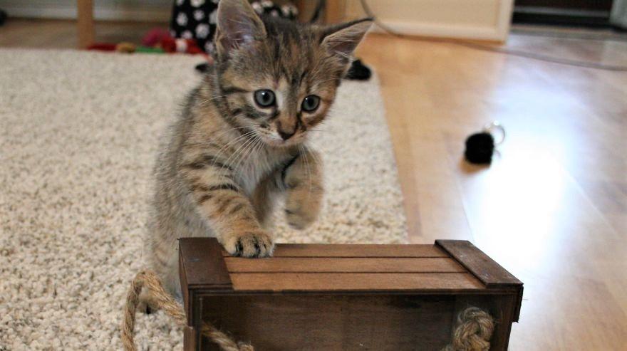 保護された子猫が、大好きな先住猫におねだりする『ある遊び』が可愛かった…(*´艸`*)♡