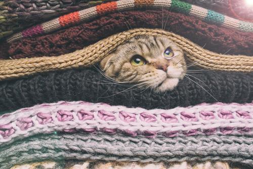 2/21 猫好きは集まれ! 猫雑貨が集まるイベントが開催
