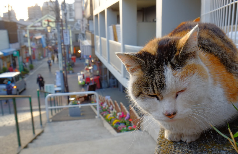 """猫好きカップルにオススメ♡ """"谷中""""は下町風情&猫さんぽが楽しめる♪"""