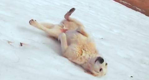 雪が積もった坂道にて、独自の楽しみ方を編み出したワンコ♪ 夢中で遊ぶ姿が、無邪気100%…♡