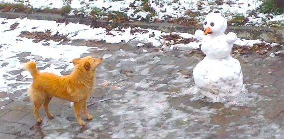 【お、オマエ何者!】雪ダルマを見たワンコの反応が… 思わずニヤけてしまう可愛さ( *´艸`)♡