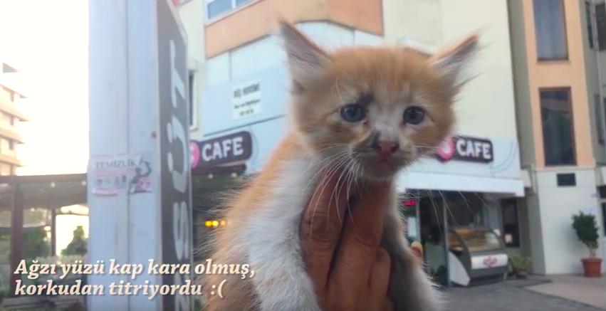 車道の中央で動けなくなっていた小さな生き物。一瞬で子猫だと判断した運転手に救出される。