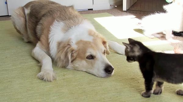 子猫と仲良くなりたいのに、怖がられちゃって切なげなワンコ。哀愁ただよう表情が…(´;ω;`)