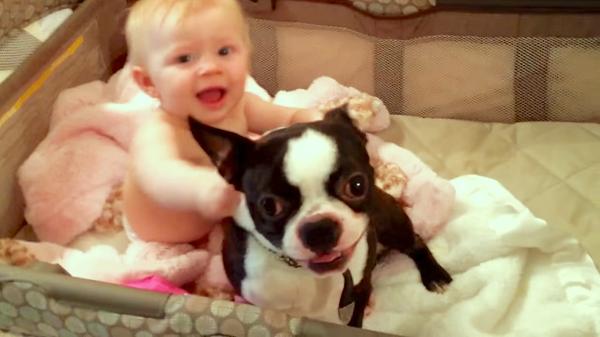 赤ちゃんを楽しませようと、奮闘するワンコ♪ 笑い声を聞いて、嬉しそうな姿にほっこり(*´ω`*)♡