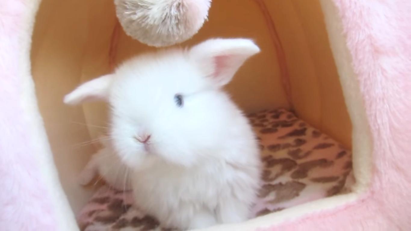 【最上級ふわもこ♡】綿毛のような子ウサギたちの、衝撃のかわいさをご覧あれッ(ㆁωㆁ*)!