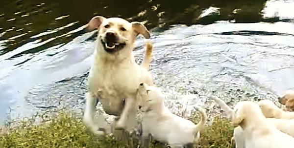 遊びに来て大はしゃぎなパパと、つられて楽しそうな子犬達♪ 仲良し家族の光景に、笑顔が止まらない♡