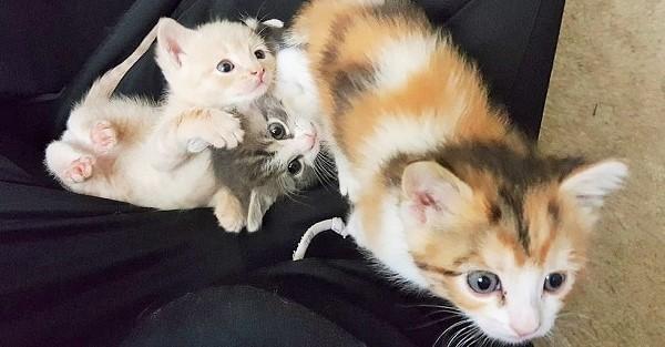 茂みに取り残され、必死に助けを求めていた子猫達。優しい一家に保護され、幸せになった姿にホッとする