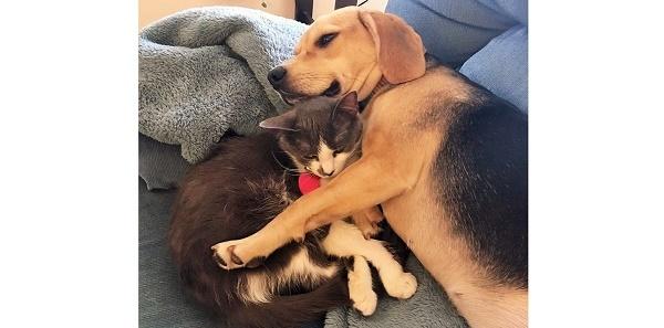 『犬と仲良くなれない』と言われていた猫を引き取った → 2日後、ビックリしちゃう光景が…♡ 6枚