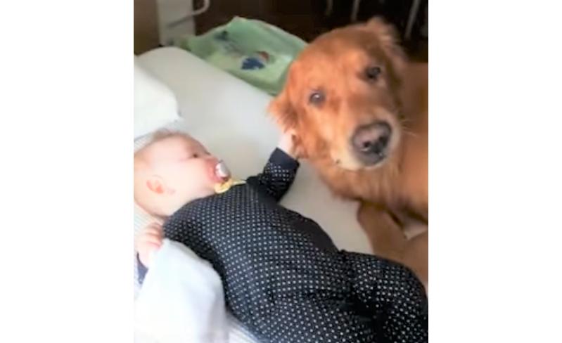 【赤ちゃんが愛おしくて♡】愛情溢れるワンコの行動に、ほっこりが止まらない…(*´ェ`*)