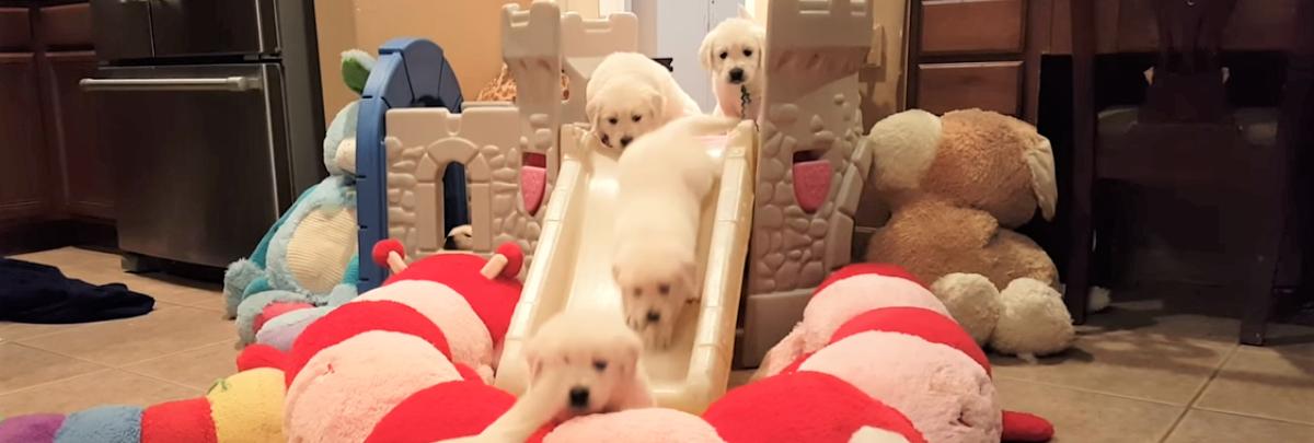 【一体何匹いるの~♡】腹ぺこな子犬が次から次へと滑り降りてくる、夢のような滑り台…(*´艸`*)