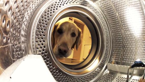 愛犬のテディベアを、洗濯機で洗おうとした → 心配したワンコが、のっそりとやって来て…( *´艸`)