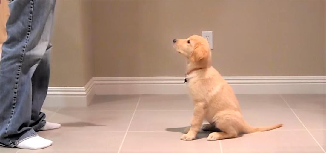 トレーニングの日! 一生懸命に頑張る子犬ちゃんが、ナデナデしたくなるほどカワイイ…(´;ω;`)♡