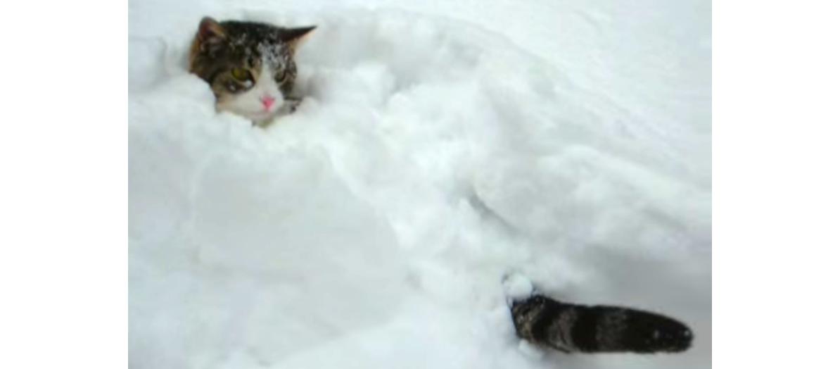 雪の中で丸くなるニャンコさん! ぬっくぬくを満喫(*'∀')!?