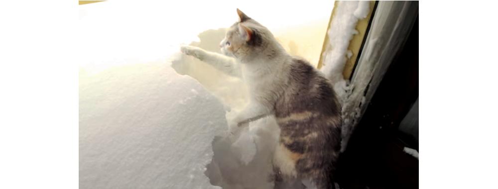 ドアを開けたら、雪の壁が広がっていた! →  外に出たいネコの『まさかの行動』とは…( ゚д゚)?