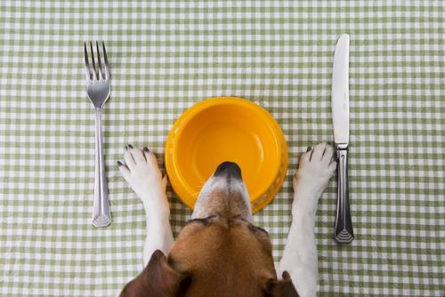 【犬の餌】量と回数は、どのくらい? 成長に合わせて変えていますか