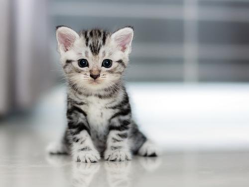 一人暮らしだけど猫を飼いたい! 一人でも子猫を飼う方法!