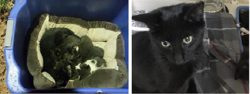 """寒さに震える子猫たちを守っていた1匹の成猫。保護して分かった成猫の """"愛情深さ"""" に感動…"""