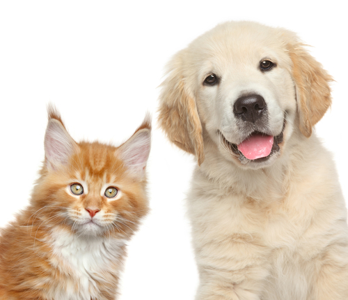 犬猫好きは必見! 巨大イベント「わんにゃんドーム2016」が2月に開催