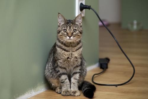 猫が噛まないように注意! コンセントによる感電について