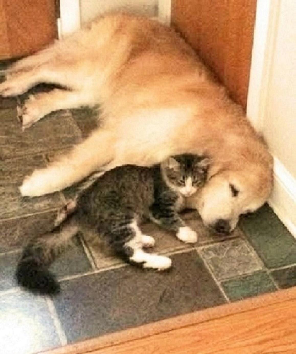 分離不安に苦しむワンちゃん。彼女を『寂しさ』から救い出したのは、1匹の保護子猫でした(6枚)