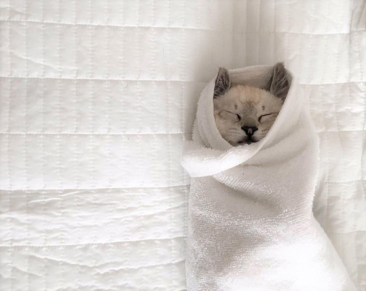 保護した子猫を包んで、イイコイイコしてあげたら → そのまま寝ちゃった…♡(10枚)