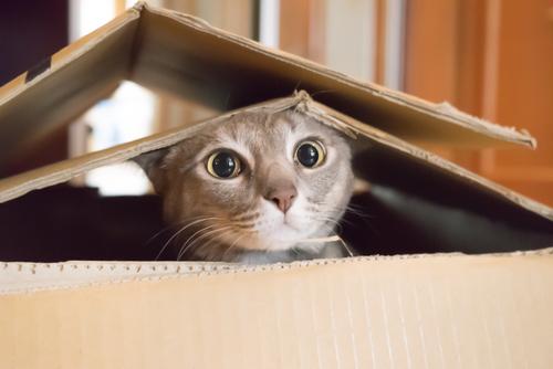 東京の猫ちゃん専門のペットホテルをまとめました!