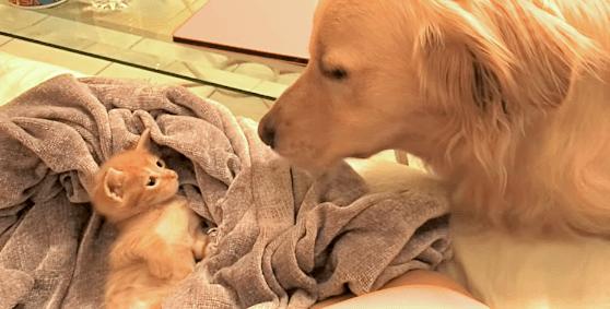 大きいワンコが不思議でたまらない子ネコが取った、ピュアすぎる行動に… キュンとする(*´ェ`*)♡