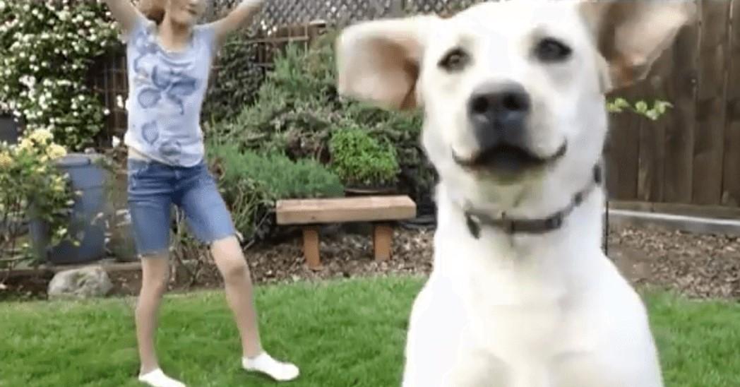 【主人公になるワーン!】側転の練習動画にどうしても写りたいワンコの行動に、爆笑の28秒間!
