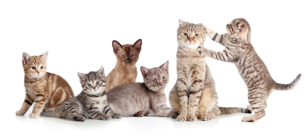 復活1位は、あの名前! 今、一番人気のネコの名前「最新ランキング」発表